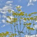 写真: 秋の空と