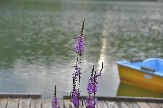 静かな湖畔に・・