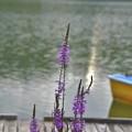 Photos: 静かな湖畔に・・