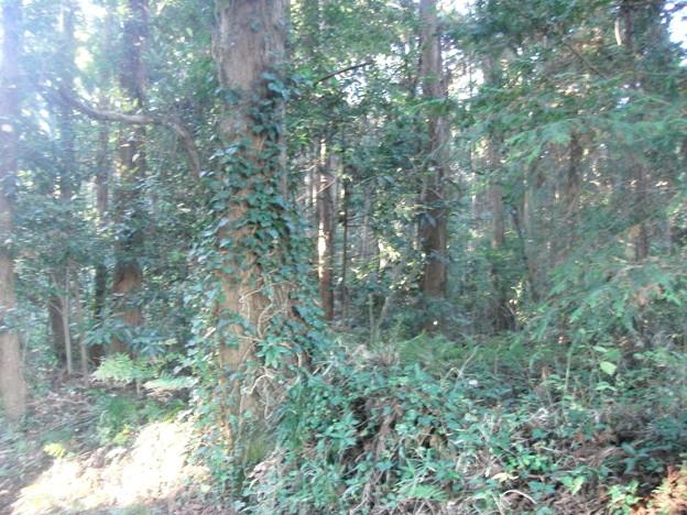 平賀の森林