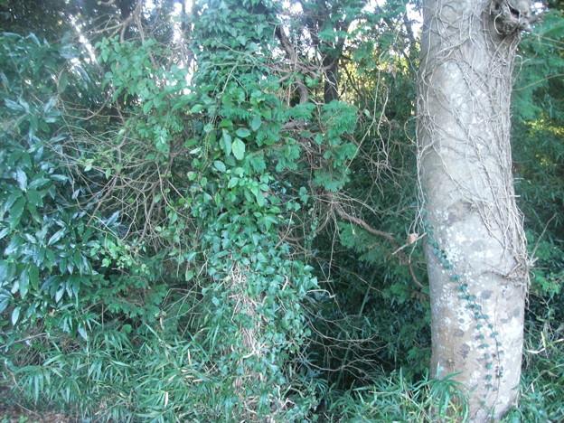 平賀の森林7
