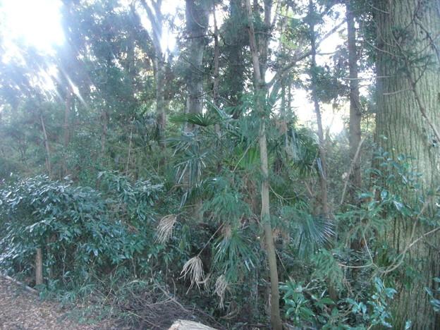 平賀の森林10