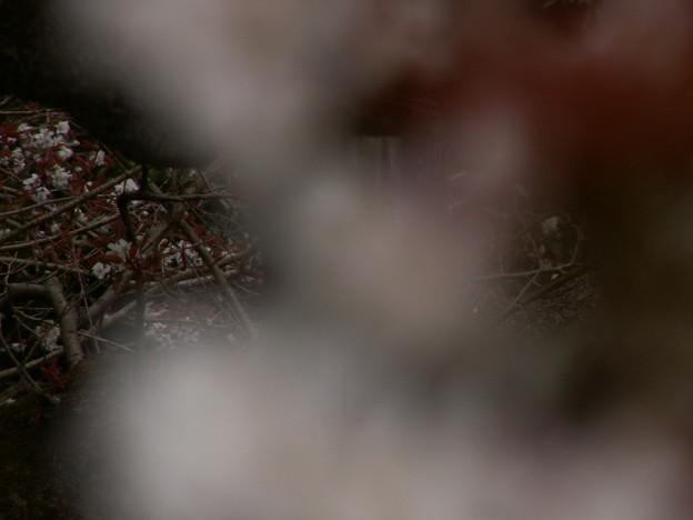 桜2010 009
