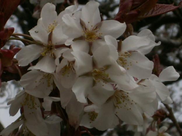 桜2010 020