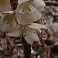 Photos: 桜2010 022