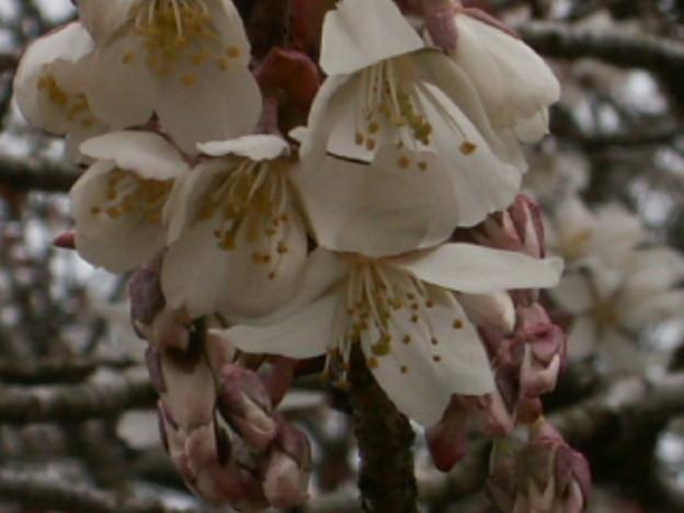桜2010 023