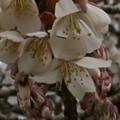 Photos: 桜2010 023