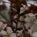 Photos: 桜2010 028