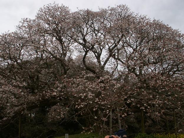 Photos: 桜2010 040