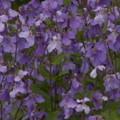 Photos: 桜2010 041