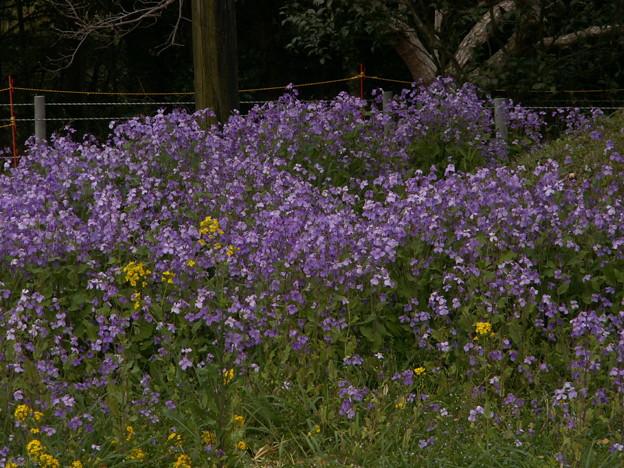 桜2010 043
