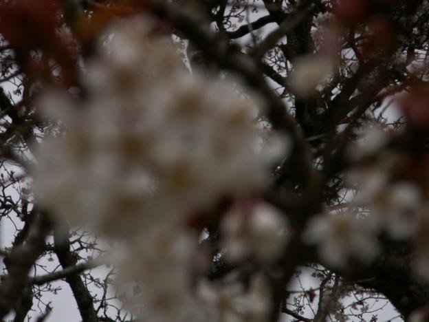 桜2010 045