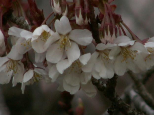 桜2010 055