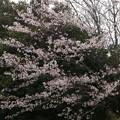 Photos: 桜2010 092