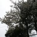 Photos: 桜2010 093