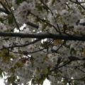 Photos: 桜2010 094