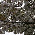 Photos: 桜2010 095