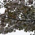 Photos: 桜2010 097