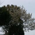 Photos: 桜2010 099