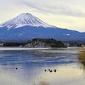 河口湖與富士山