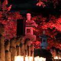 Photos: 五百羅漢 紅葉ライトアップ
