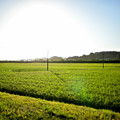 Photos: 田舎の朝