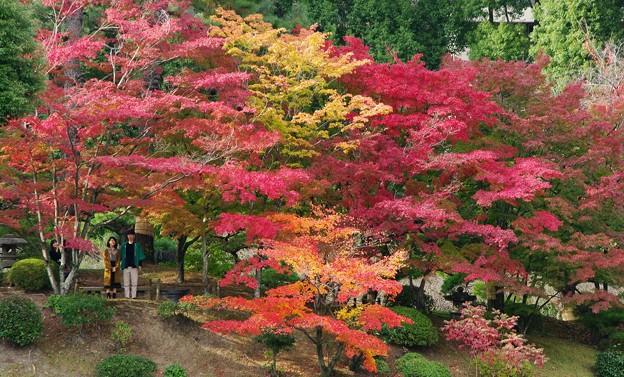 秋の縮景園
