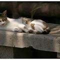 Photos: たまり場