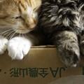 写真: 白玉&ゴマ団子