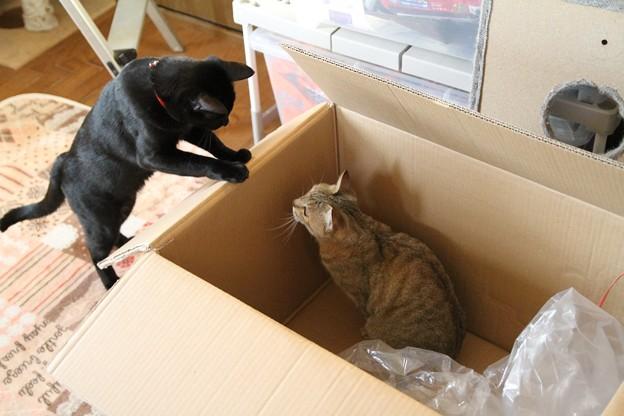 しじみも箱が好き