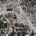 写真: 0856usdk105雨氷