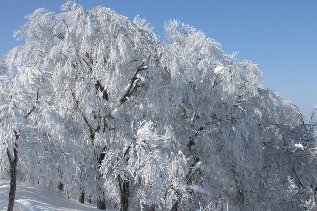 1107usdk154雨氷+霧氷