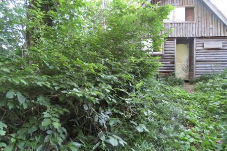 180718-20白山中宮道 8完