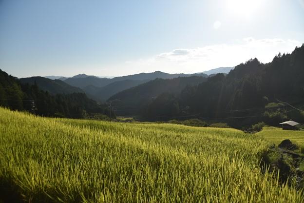 新城 四谷千枚田 上から見下ろす