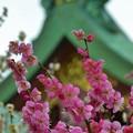 写真: 北野天満宮(京都)