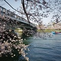 Photos: 桜の宮