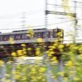 写真: カラシナ電車