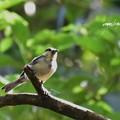 写真: シジュウカラ幼鳥