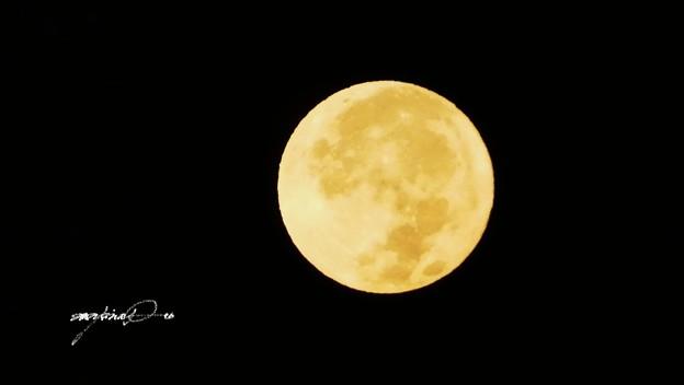 黄色いお月さん