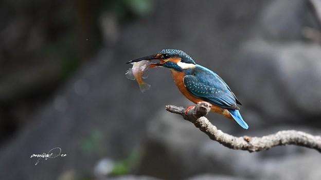 写真: 大漁