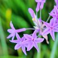 写真: なんの花