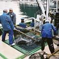梶賀大敷200411 (43)
